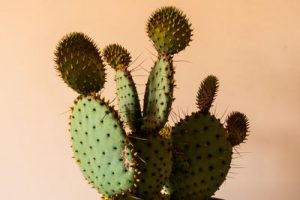 Болки 3 - кактус